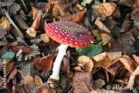 Herfst in hetLiedtspark