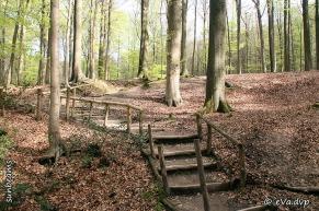 Aangelegde trappen in het Brakelbos